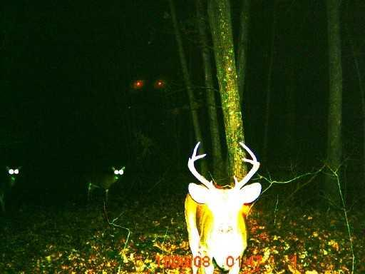 unknown trailcam photo