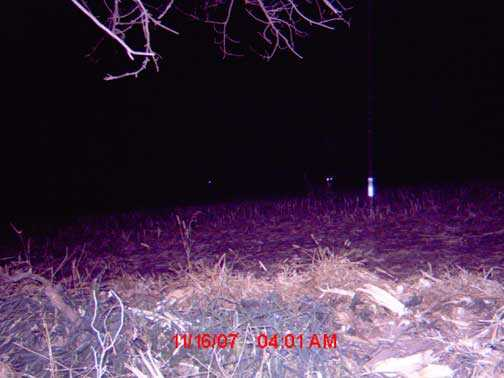 Unknown Image trailcam