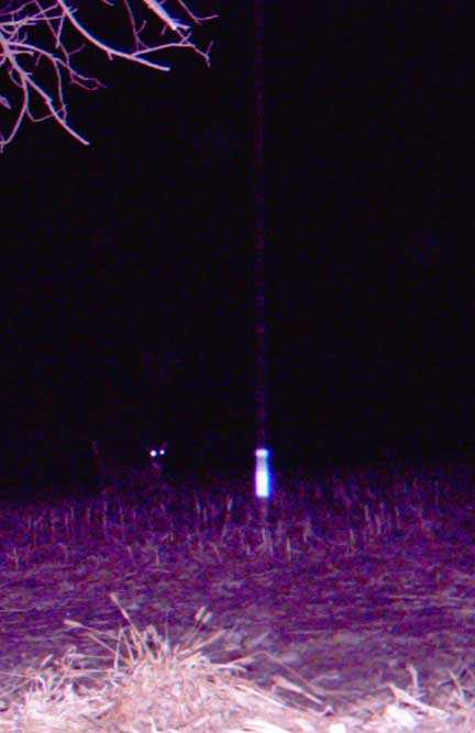 unknow trailcam image